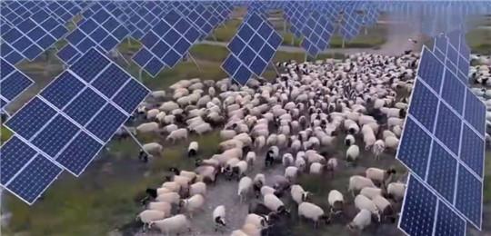 """中国发电遇""""世界难题"""",居然被几千只羊解决了!华全整理"""